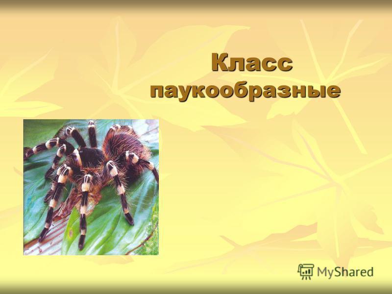 Класс паукообразные Класс паукообразные