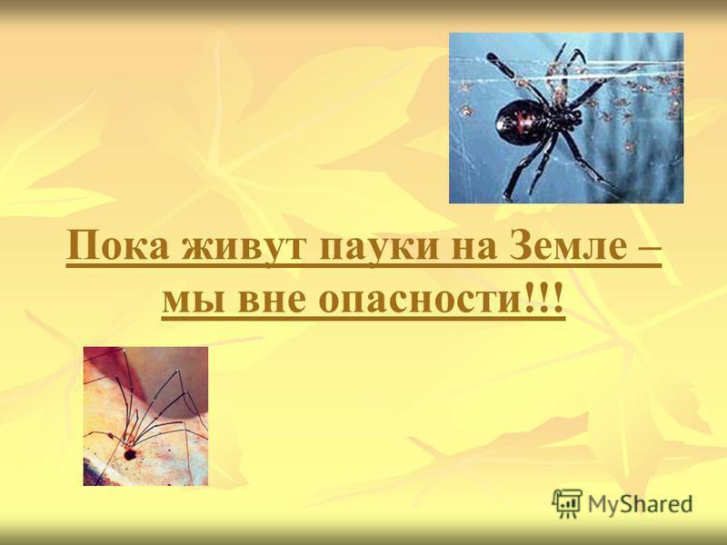 Пока живут пауки на Земле – мы вне опасности!!!