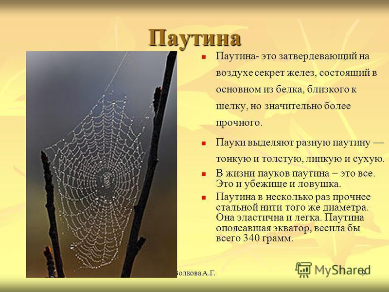 Волкова А.Г.9 Паутина Паутина- это затвердевающий на воздухе секрет желез, состоящий в основном из белка, близкого к шелку, но значительно более прочного. Пауки выделяют разную паутину тонкую и толстую, липкую и сухую. В жизни пауков паутина – это вс