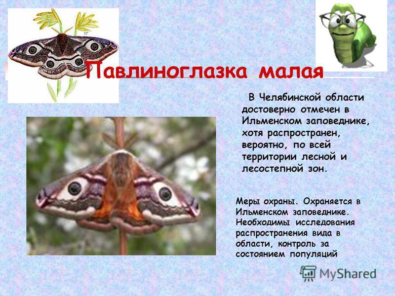 В Челябинской области достоверно отмечен в Ильменском заповеднике, хотя распространен, вероятно, по всей территории лесной и лесостепной зон. Меры охраны. Охраняется в Ильменском заповеднике. Необходимы исследования распространения вида в области, ко
