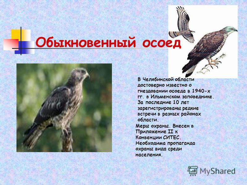 Обыкновенный осоед В Челябинской области достоверно известно о гнездовании осоеда в 1940-х гг. в Ильменском заповеднике. За последние 10 лет зарегистрированы редкие встречи в разных районах области. Меры охраны. Внесен в Приложение II к Конвенции СИТ