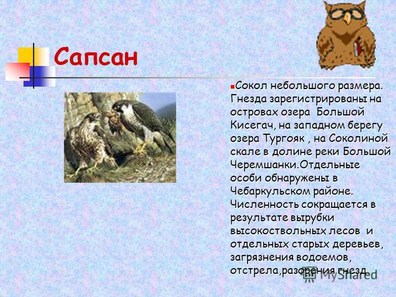 Сапсан Сокол небольшого размера. Гнезда зарегистрированы на островах озера Большой Кисегач, на западном берегу озера Тургояк, на Соколиной скале в долине реки Большой Черемшанки.Отдельные особи обнаружены в Чебаркульском районе. Численность сокращает