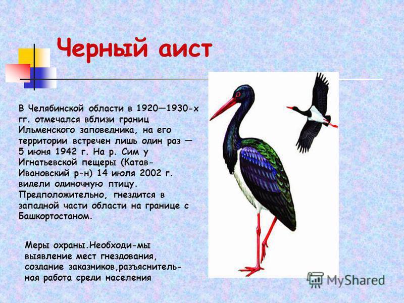 В Челябинской области в 19201930-х гг. отмечался вблизи границ Ильменского заповедника, на его территории встречен лишь один раз 5 июня 1942 г. На р. Сим у Игнатьевской пещеры (Катав- Ивановский р-н) 14 июля 2002 г. видели одиночную птицу. Предположи