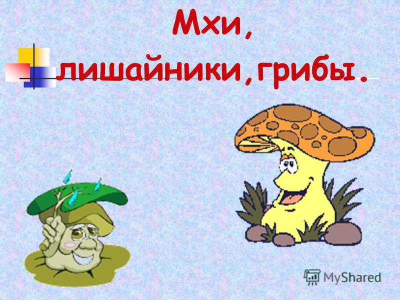 Мхи, лишайники,грибы.