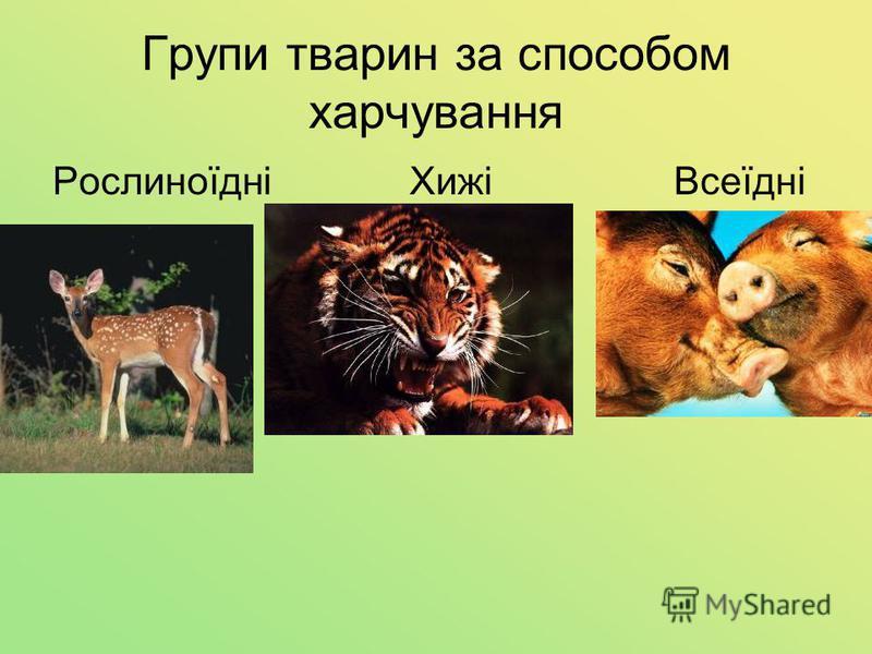 Групи тварин за способом харчування Рослиноїдні Хижі Всеїдні