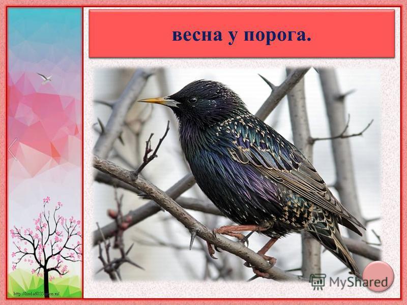 Увидел скворца – знай: весна у порога.