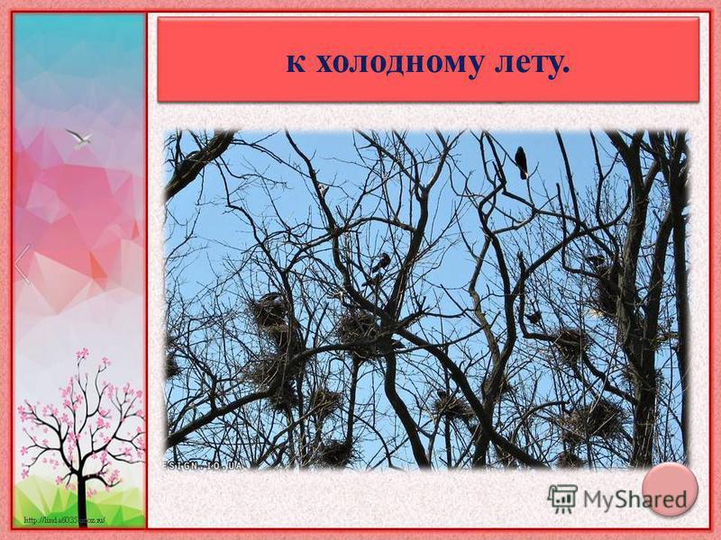 Птицы вьют гнезда на солнечной стороне - к холодному лету.