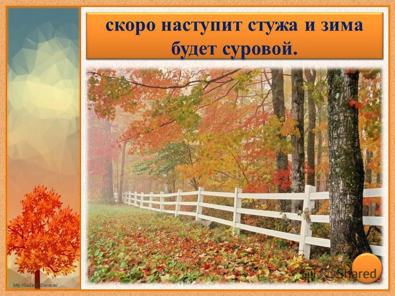 Листопад прошел быстро – скоро наступит стужа и зима будет суровой.