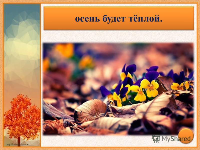 Если до поздней осени цветут анютины глазки, лютики, то … осень будет тёплой.
