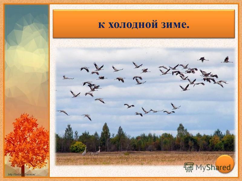 Осенью птицы летят низко – к холодной зиме.