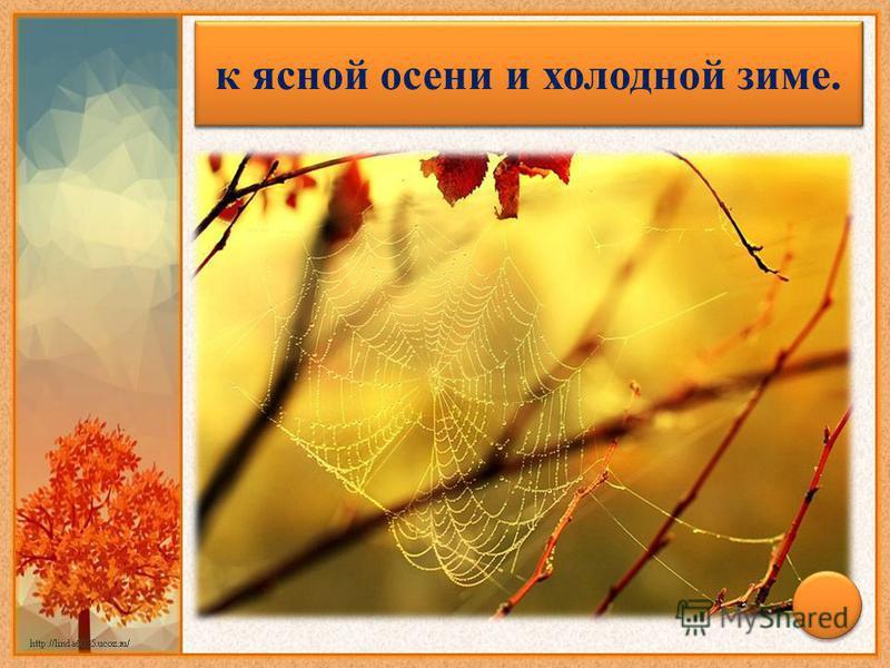 Много паутины на бабье лето – к ясной осени и холодной зиме.