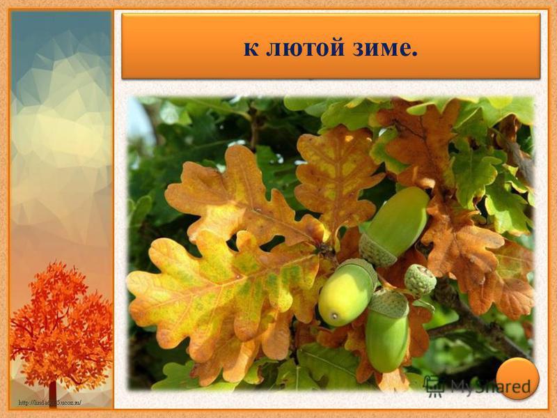 Много желудей в сентябре на дубе – к лютой зиме.