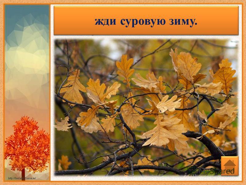 Если в октябре лист с березы и дуба опадет не чисто - жди суровую зиму.