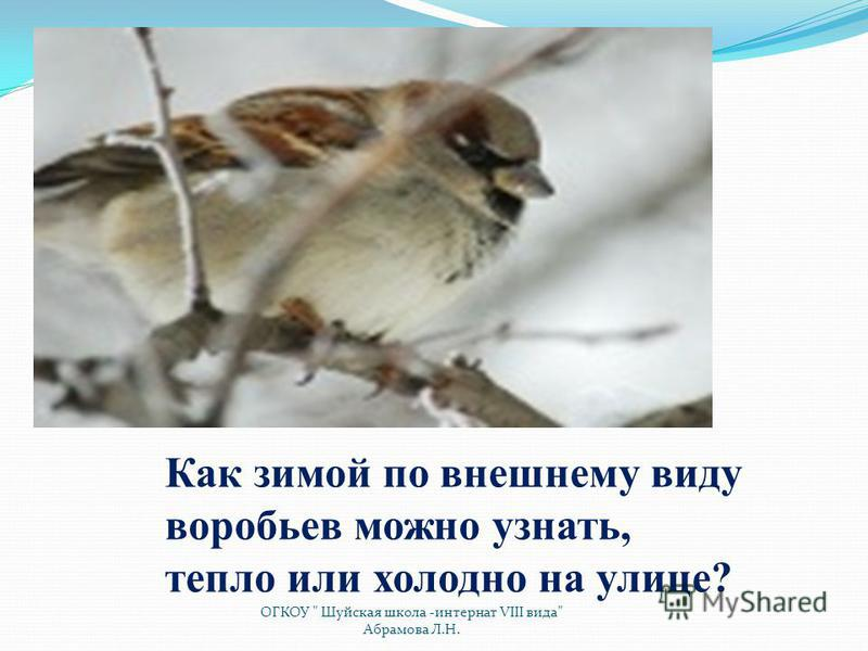 Как зимой по внешнему виду воробьев можно узнать, тепло или холодно на улице? ОГКОУ  Шуйская школа -интернат VIII вида Абрамова Л.Н.