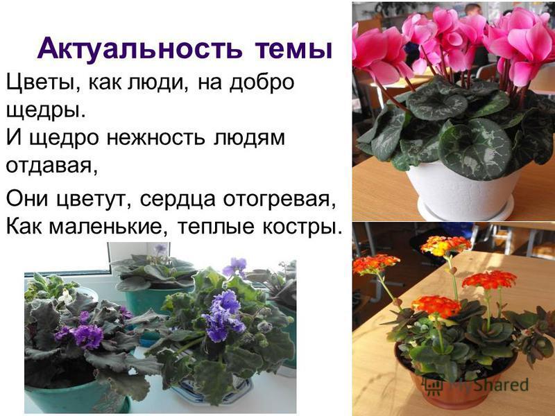 Актуальность темы Цветы, как люди, на добро щедры. И щедро нежность людям отдавая, Они цветут, сердца отогревая, Как маленькие, теплые костры.