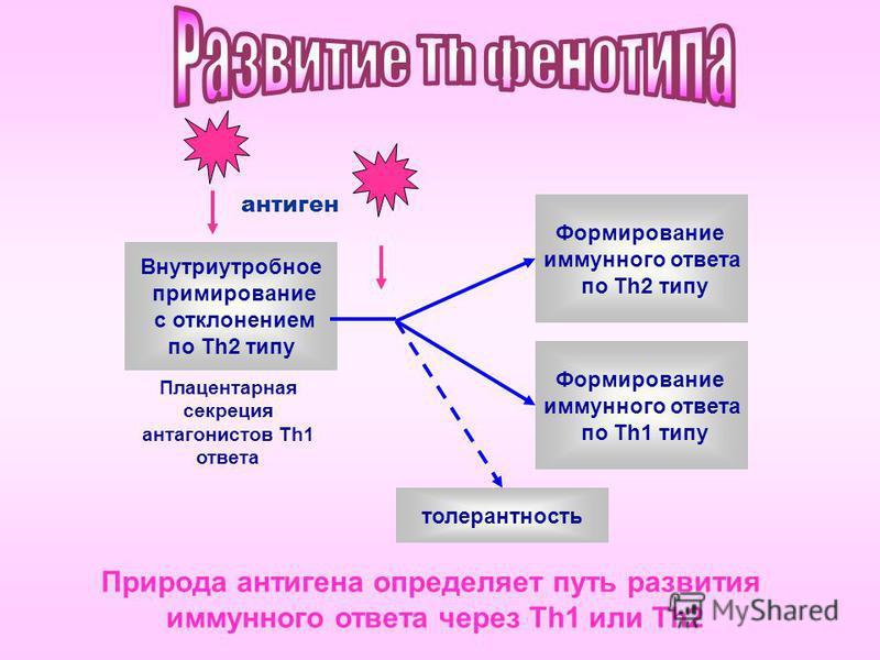 антиген Внутриутробное примирование с отклонением по Тh2 типу Формирование иммунного ответа по Тh2 типу Формирование иммунного ответа по Тh1 типу толерантность Плацентарная секреция антагонистов Th1 ответа Природа антигена определяет путь развития им