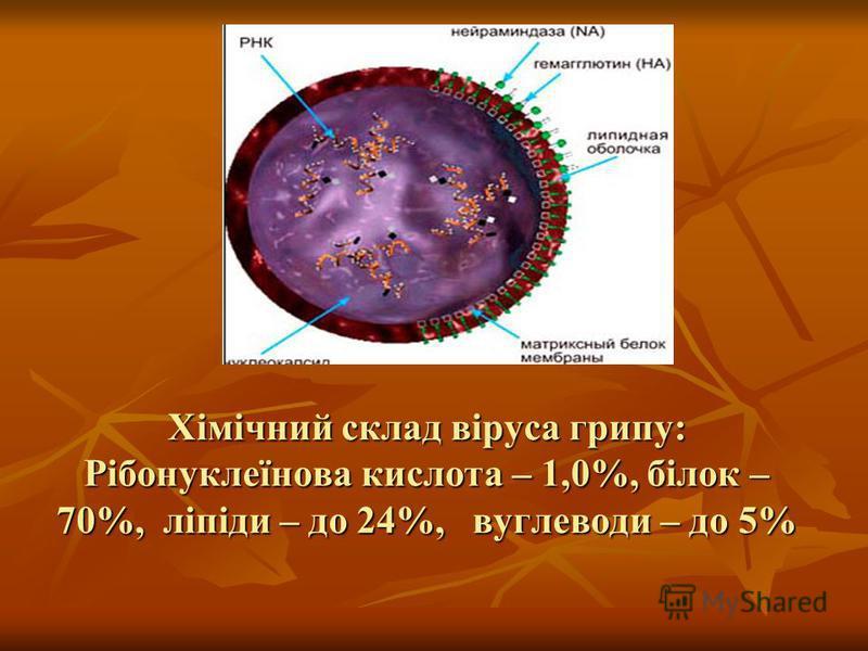 Хімічний склад віруса грипу: Рібонуклеїнова кислота – 1,0%, білок – 70%, ліпіди – до 24%, вуглеводи – до 5%