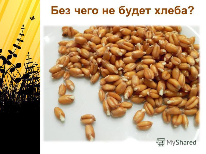Без чего не будет хлеба?