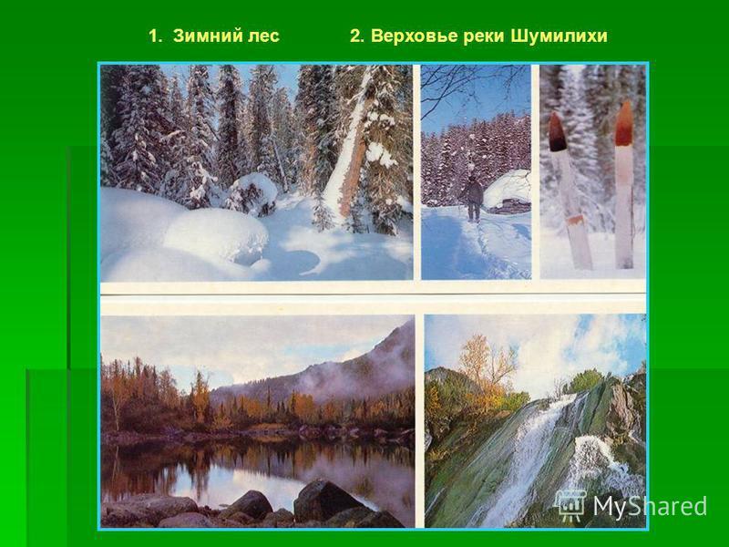 1. Зимний лес 2. Верховье реки Шумилихи