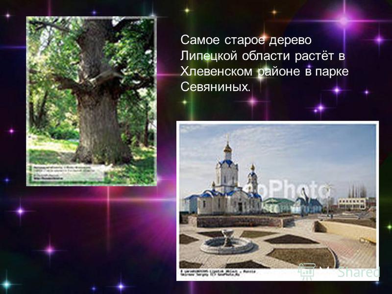 Самое старое дерево Липецкой области растёт в Хлевенском районе в парке Севяниных.
