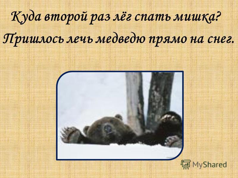 Куда второй раз лёг спать мишка? Пришлось лечь медведю прямо на снег.