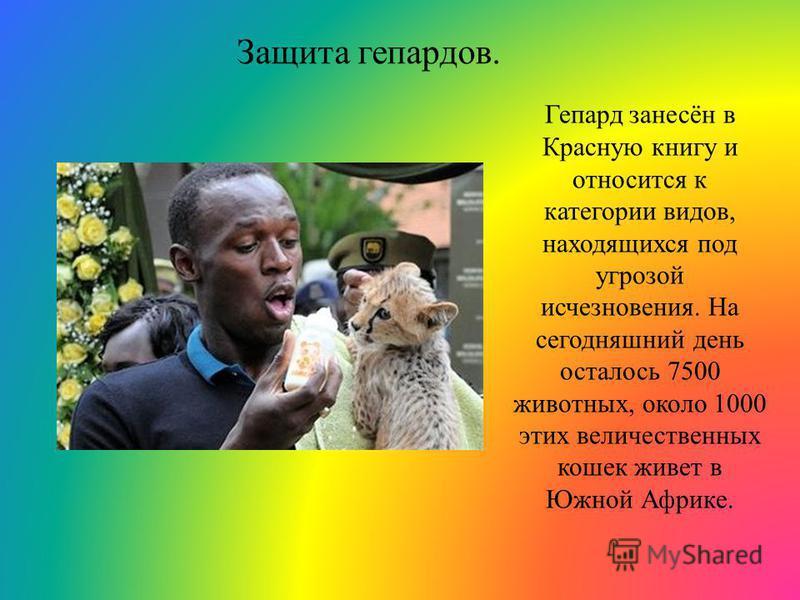 Защита гепардов. Гепард занесён в Красную книгу и относится к категории видов, находящихся под угрозой исчезновения. На сегодняшний день осталось 7500 животных, около 1000 этих величественных кошек живет в Южной Африке.