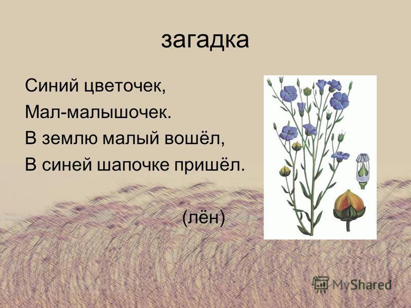 загадка Синий цветочек, Мал-малышочек. В землю малый вошёл, В синей шапочке пришёл. (лён)