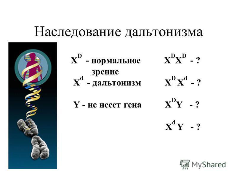 Наследование дальтонизма Х D - нормальное Х D Х D - ? зрение Х d - дальтонизм Х D Х d - ? Y - не несет гена Х D Y - ? Х d Y - ?