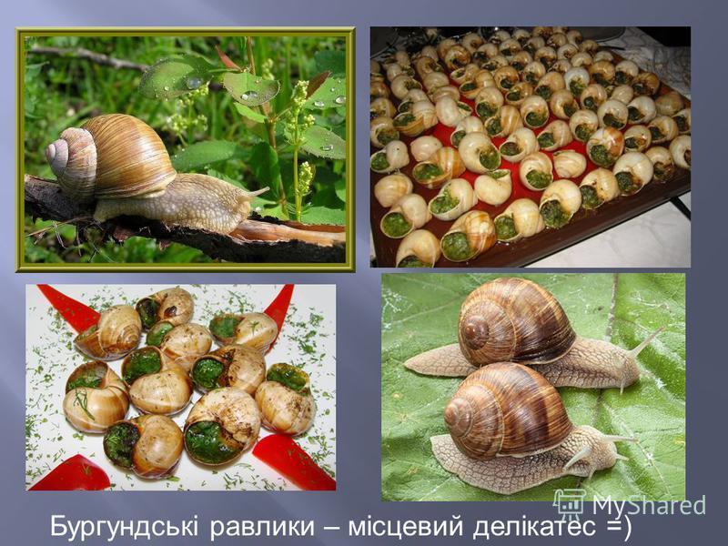 Бургундські равлики – місцевий делікатес =)