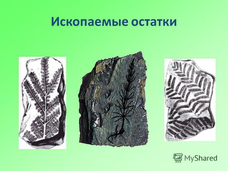 Ископаемые остатки