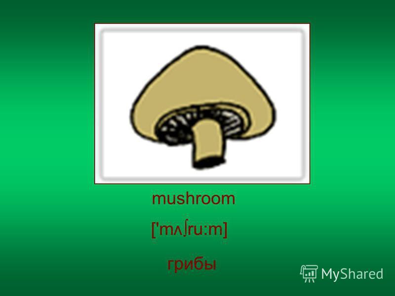 mushroom грибы ['m ru:m] v