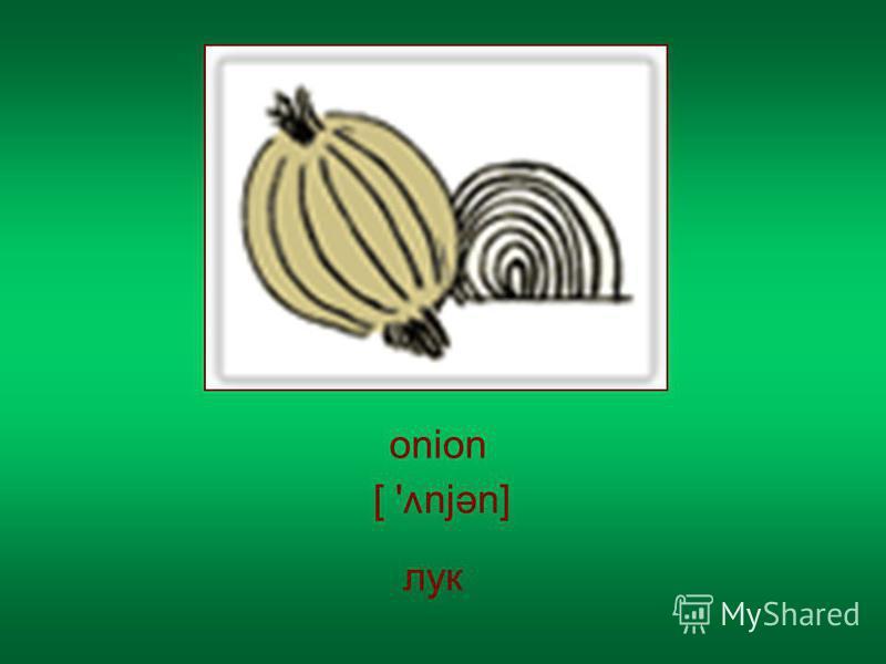 onion лук [ ' njən] v