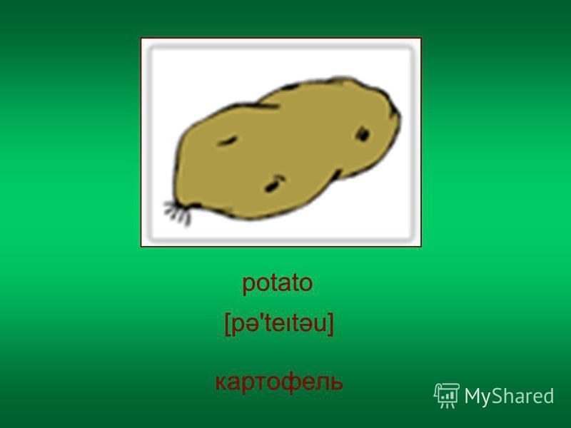 potato картофель [pə'tetəu]
