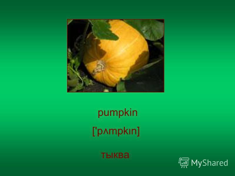 pumpkin ['p mpkn] v тыква