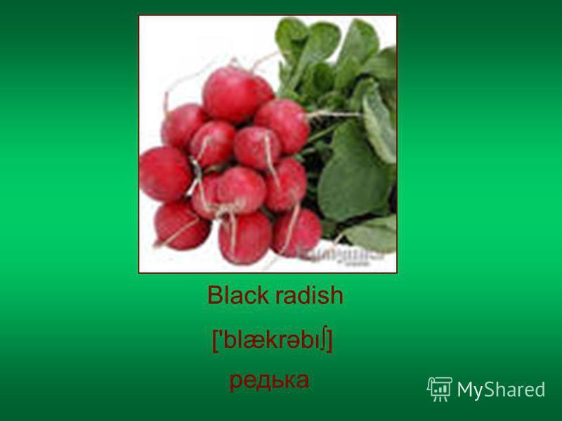 Black radish ['blækrəb] редька