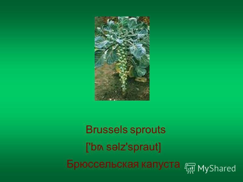 Brussels sprouts Брюссельская капуста ['br səlz'spraut] V