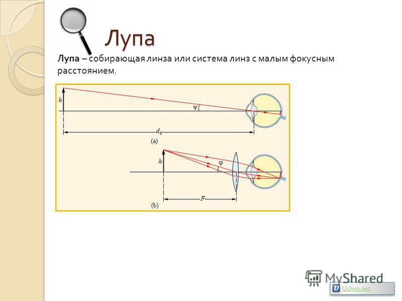 Лупа Лупа – собирающая линза или система линз с малым фокусным расстоянием. Uchim.net