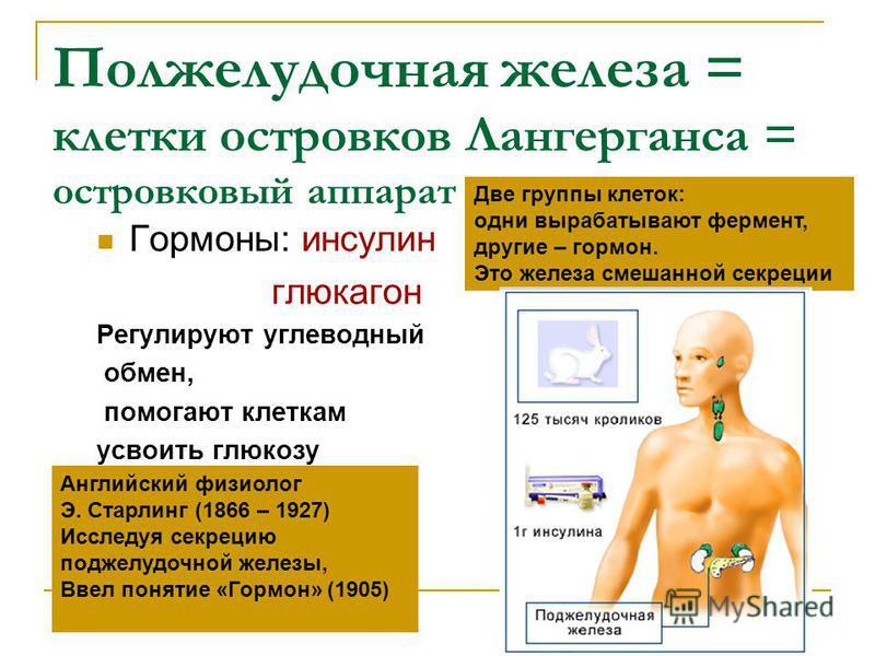 Полжелудочная железа = клетки островков Лангерганса = островковый аппарат Гормоны: инсулин глюкагон Регулируют углеводный обмен, помогают клеткам усвоить глюкозу Английский физиолог Э. Старлинг (1866 – 1927) Исследуя секрецию поджелудочной железы, Вв