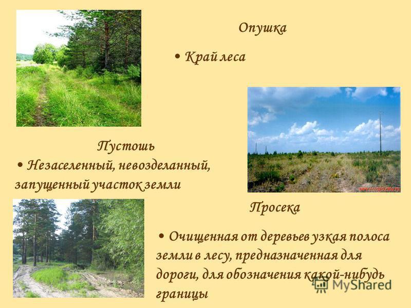 Опушка Край леса Пустошь Незаселенный, невозделанный, запущенный участок земли Просека Очищенная от деревьев узкая полоса земли в лесу, предназначенная для дороги, для обозначения какой-нибудь границы