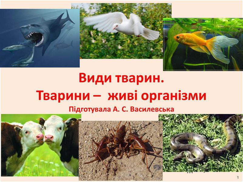 Види тварин. Тварини – живі організми Підготувала А. С. Василевська 1