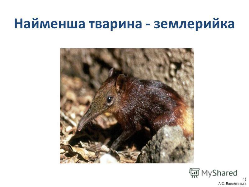 Найменша тварина - землерийка 12 А.С. Василевська