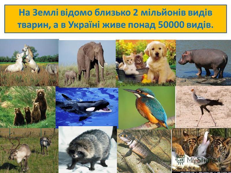 На Землі відомо близько 2 мільйонів видів тварин, а в Україні живе понад 50000 видів. 7 А.С. Василевська