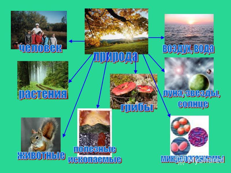 Объекты живой природы дышат Пьют, питаются растут размножаются Учебник с.47 прочитайте вывод