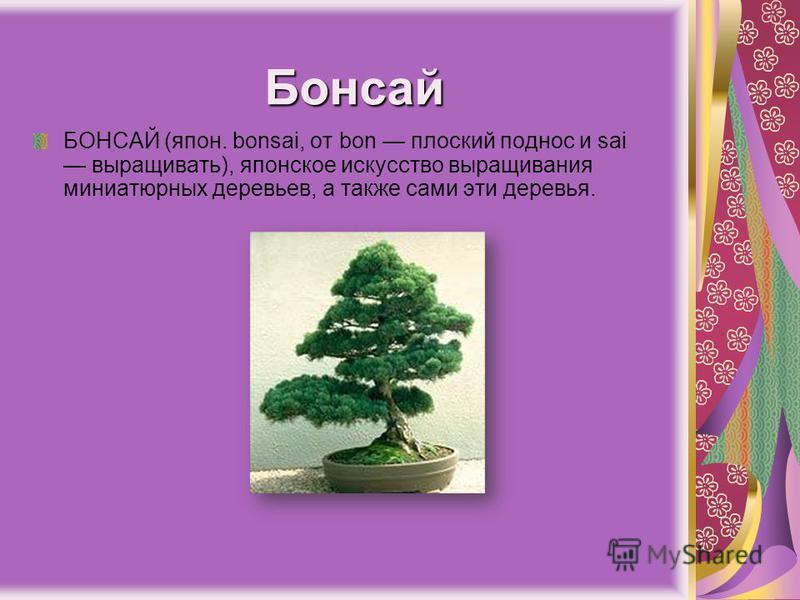 Бонсай БОНСАЙ (япон. bonsai, от bon плоский поднос и sai выращивать), японское искусство выращивания миниатюрных деревьев, а также сами эти деревья.