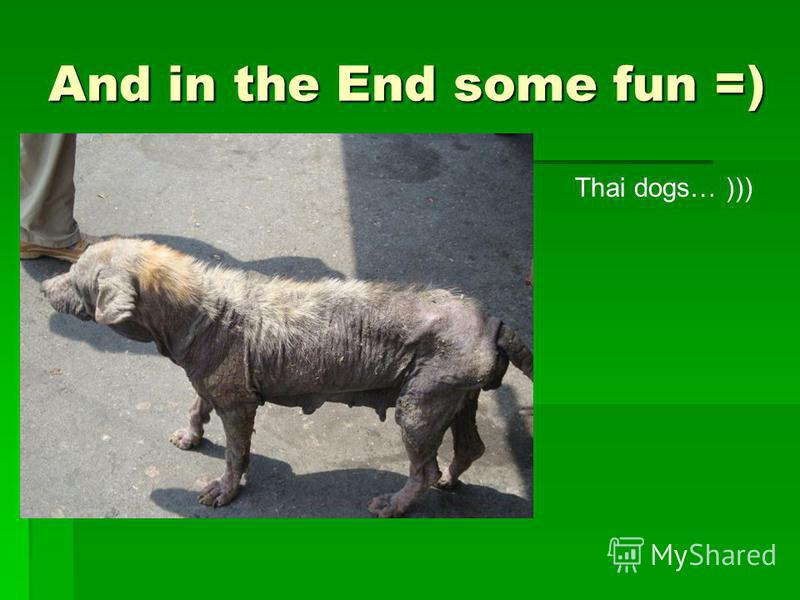 And in the End some fun =) Thai dogs… )))