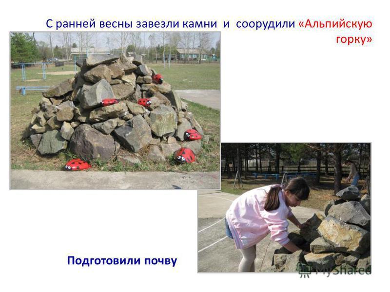 С ранней весны завезли камни и соорудили «Альпийскую горку» Подготовили почву