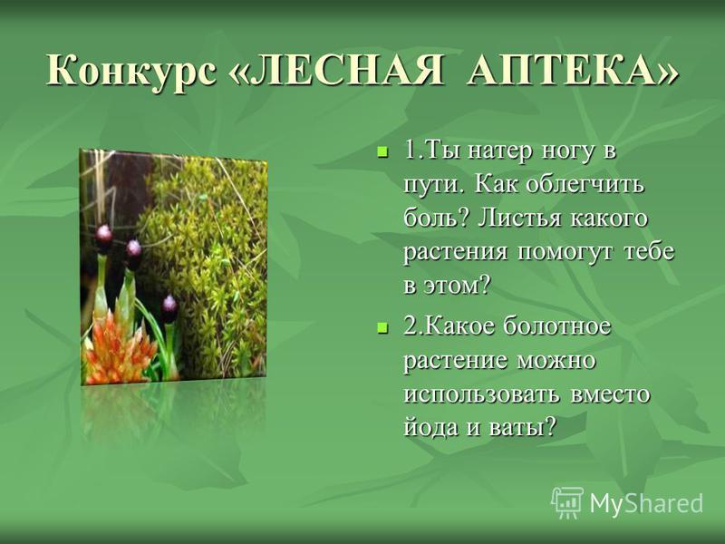 Конкурс «ЛЕСНАЯ АПТЕКА» 1. Ты натер ногу в пути. Как облегчить боль? Листья какого растения помогут тебе в этом? 1. Ты натер ногу в пути. Как облегчить боль? Листья какого растения помогут тебе в этом? 2. Какое болотное растение можно использовать вм