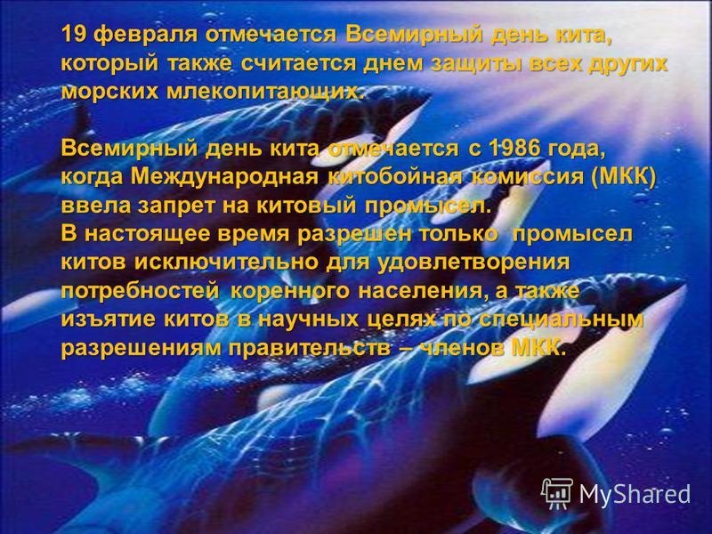 19 февраля отмечается Всемирный день кита, который также считается днем защиты всех других морских млекопитающих. Всемирный день кита отмечается с 1986 года, когда Международная китобойная комиссия (МКК) ввела запрет на китовый промысел. В настоящее