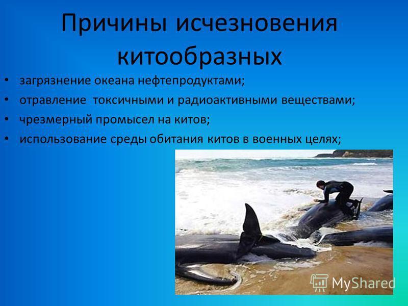 Причины исчезновения китообразных загрязнение океана нефтепродуктами; отравление токсичными и радиоактивными веществами; чрезмерный промысел на китов; использование среды обитания китов в военных целях;