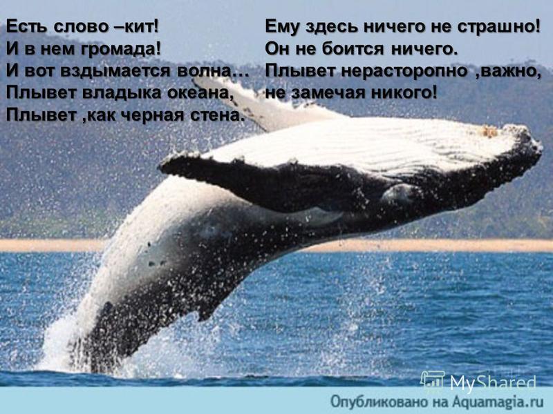 лолошгрп Есть слово –кит! И в нем громада! И вот вздымается волна… Плывет владыка океана, Плывет,как черная стена. Ему здесь ничего не страшно! Он не боится ничего. Плывет нерасторопно,важно, не замечая никого!